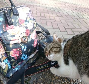 Кот, рюкзак и Sony a99